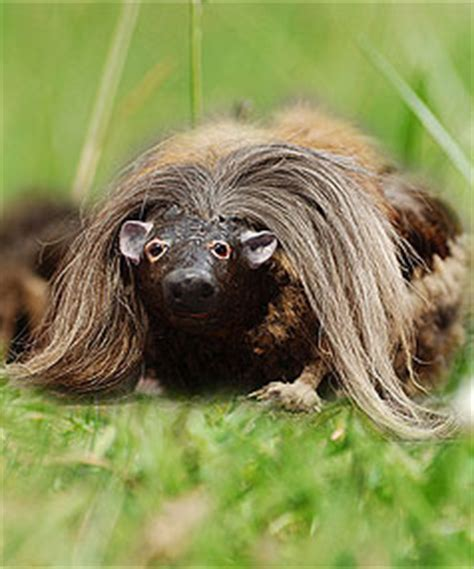 Britons believe the hills are alive with haggis | Stuff