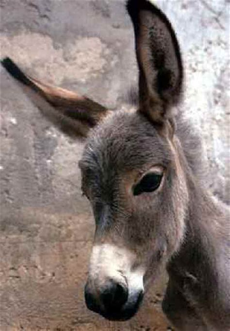 THE DONKEY By Samuel Taylor Coleridge - An All Creatures